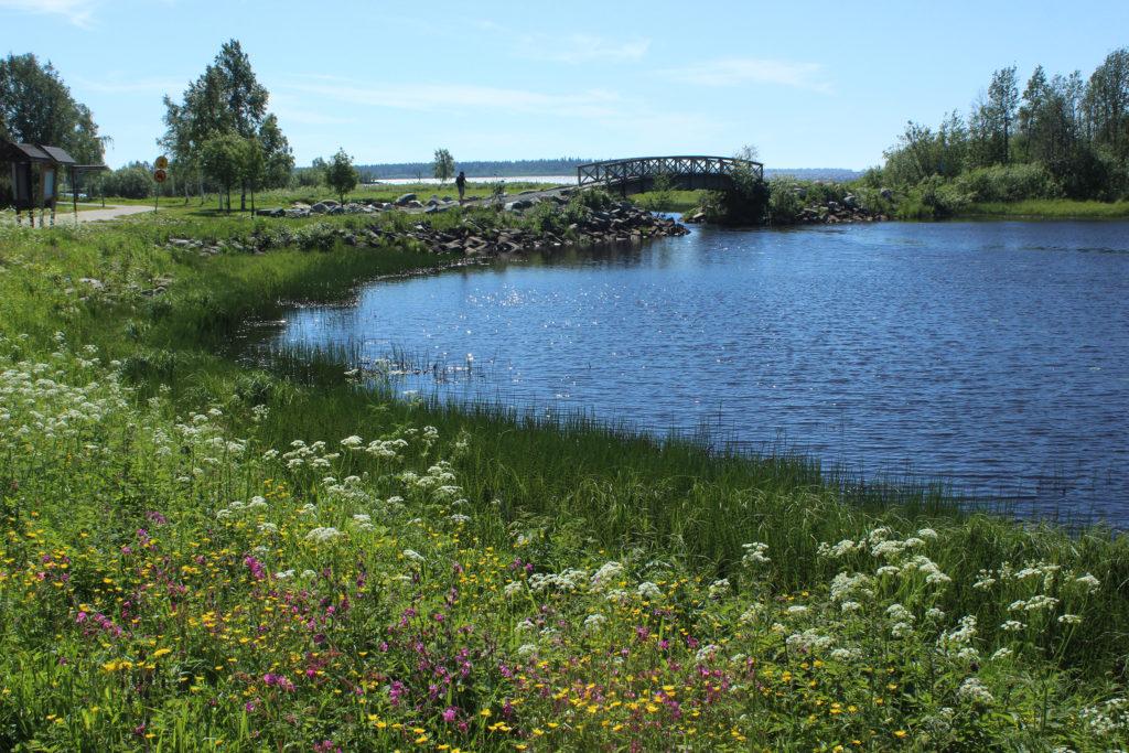 Kesäinen auringonpaiste Kiikelin rantareitillä.