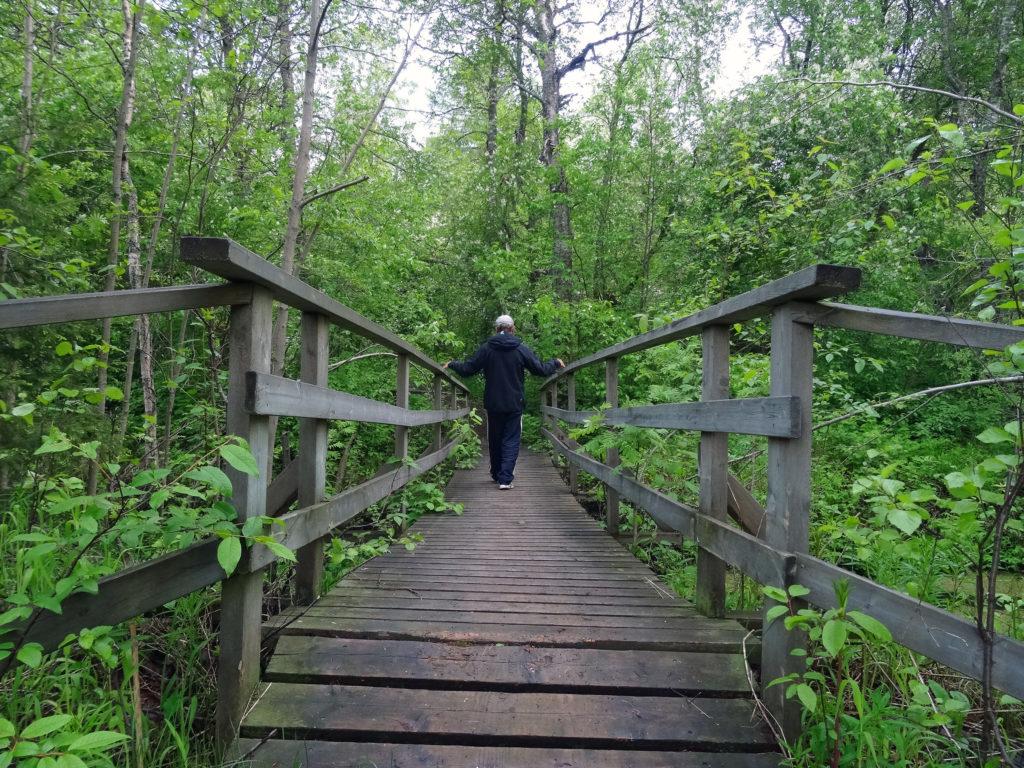 Puinen kävelysilta metsässä. Mies sillalla.