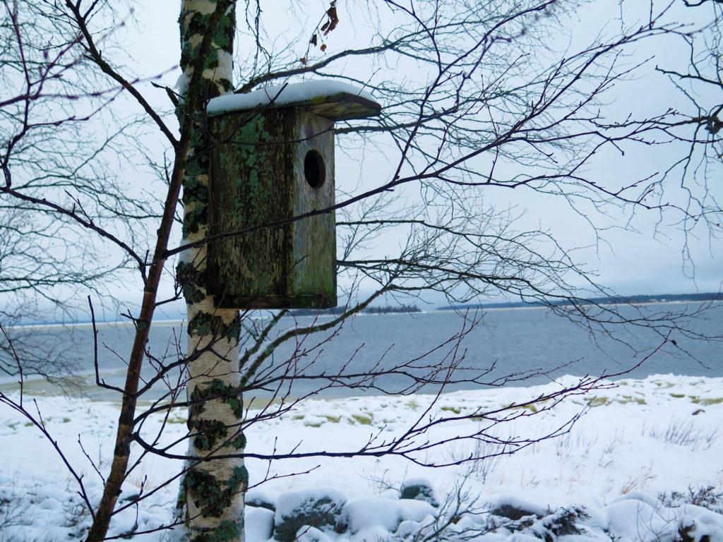 Linnunpönttö Paavonkarin rannassa.
