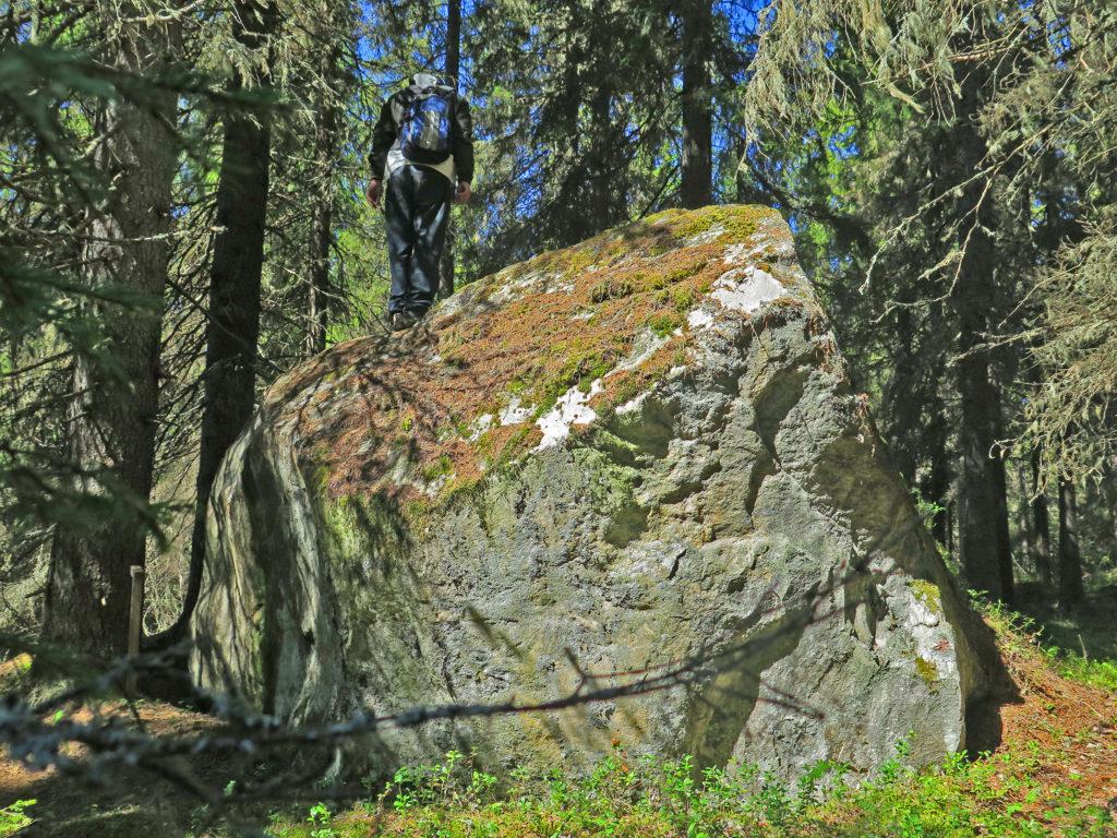 Valtava siirtolohkare Satamankankaalla metsän keskellä.