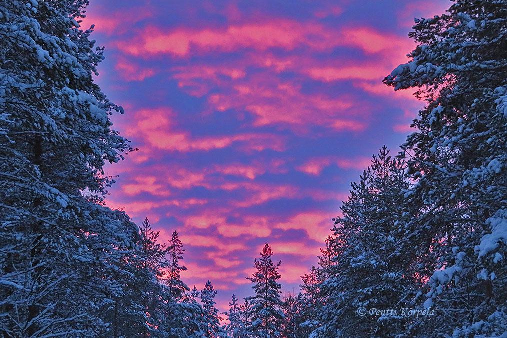 Metsää ja sinipunaiset pilvet taivaalla