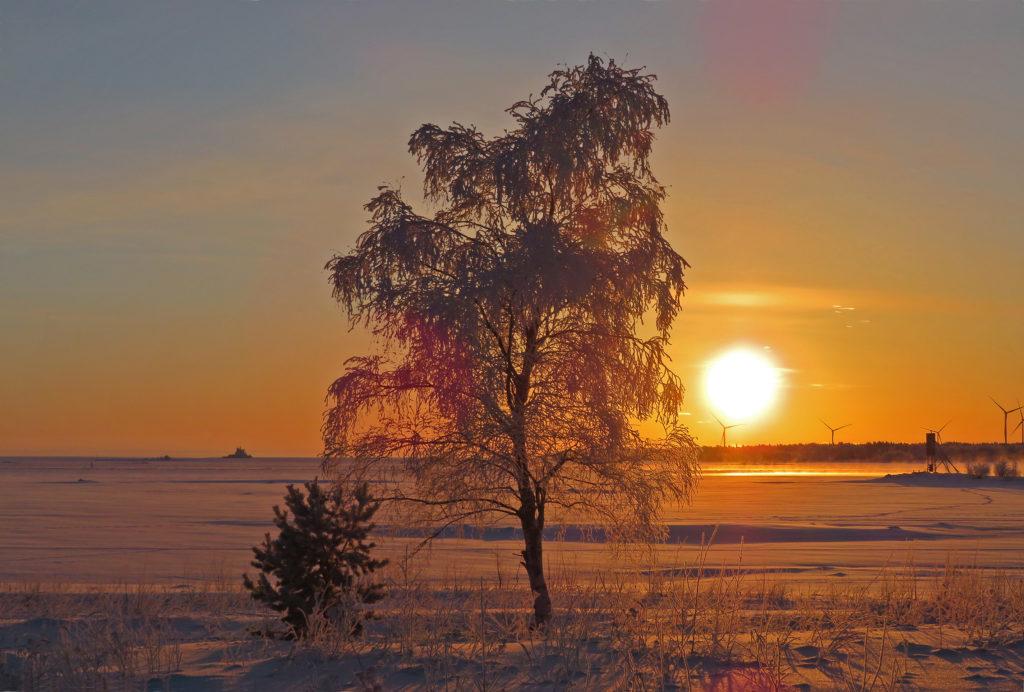 Talvinen maisema, etualalla koivu , takana tuulimyllyjä