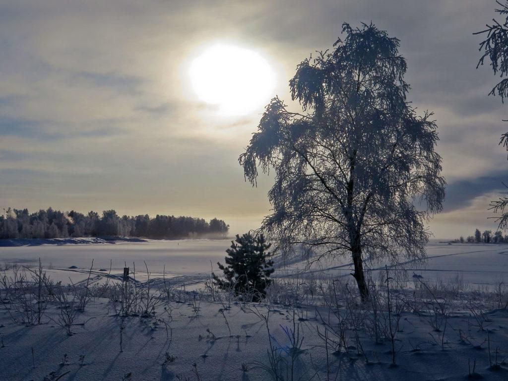 Talvinen maisema meren rannalta, etualla huurteinen koivu
