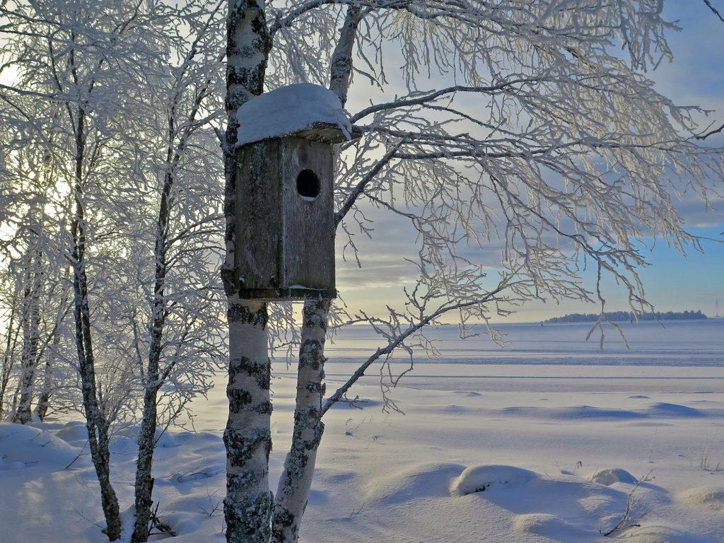 Talvinen maisema jäälle päin, etualalla huurteiseen koivunrunkoon kiinnitetty linnunpönttö